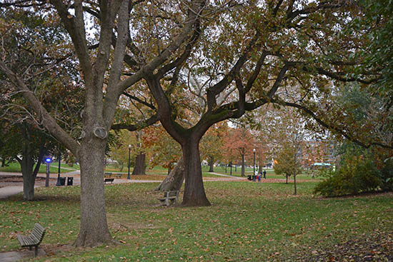 Ohio State University Campus with its stately trees. Photo by Dr. Jacob Mathew