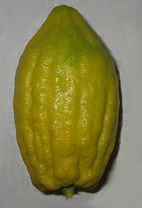 etrog fruit