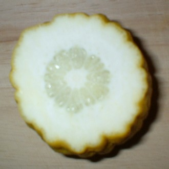 etrog fruit cross section