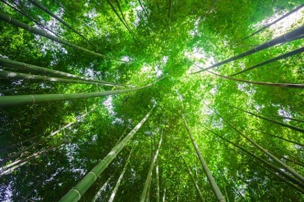Molai Woods, Assam, India